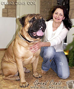 Бульмастиф Гранд Канис Гор / bullmastiff Grand Canis GOR